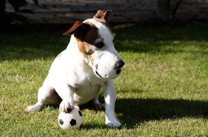 animal_soccer_03
