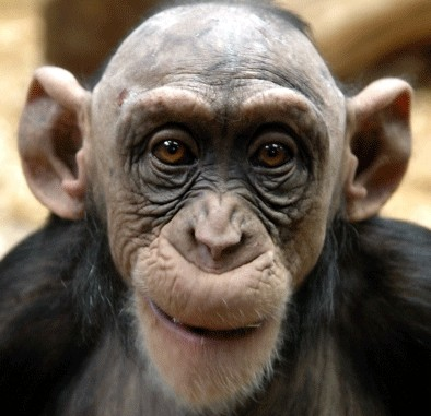 old_monkey_face_normal