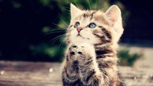 39162-cats-sweet-kitty